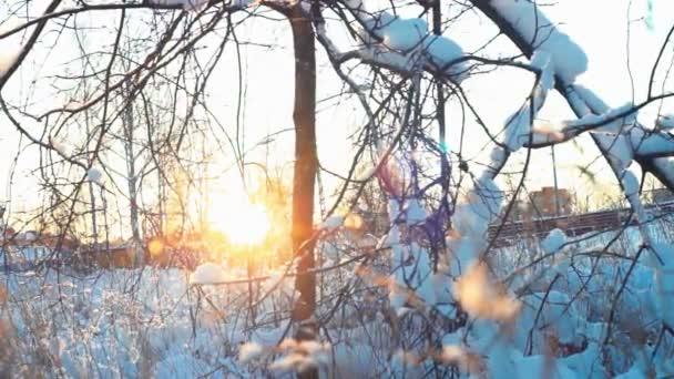 Nap ragyog fa ága, a téli nap