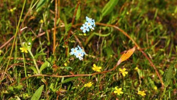 Small Blue Flowers in grass