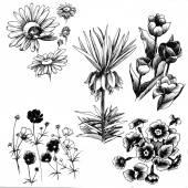 sada ručně kreslenou květin