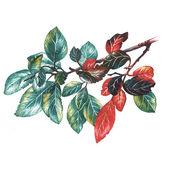 Kreslení růže listí