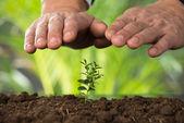 Fényképek Kezek védelme a növényvédő földön