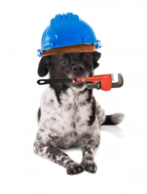 Dog Wearing Hard Hat