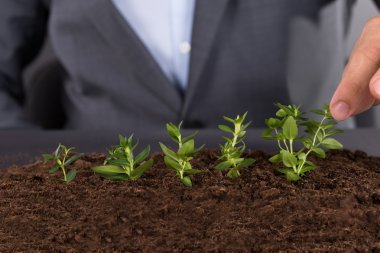 Businessman growing green saplings
