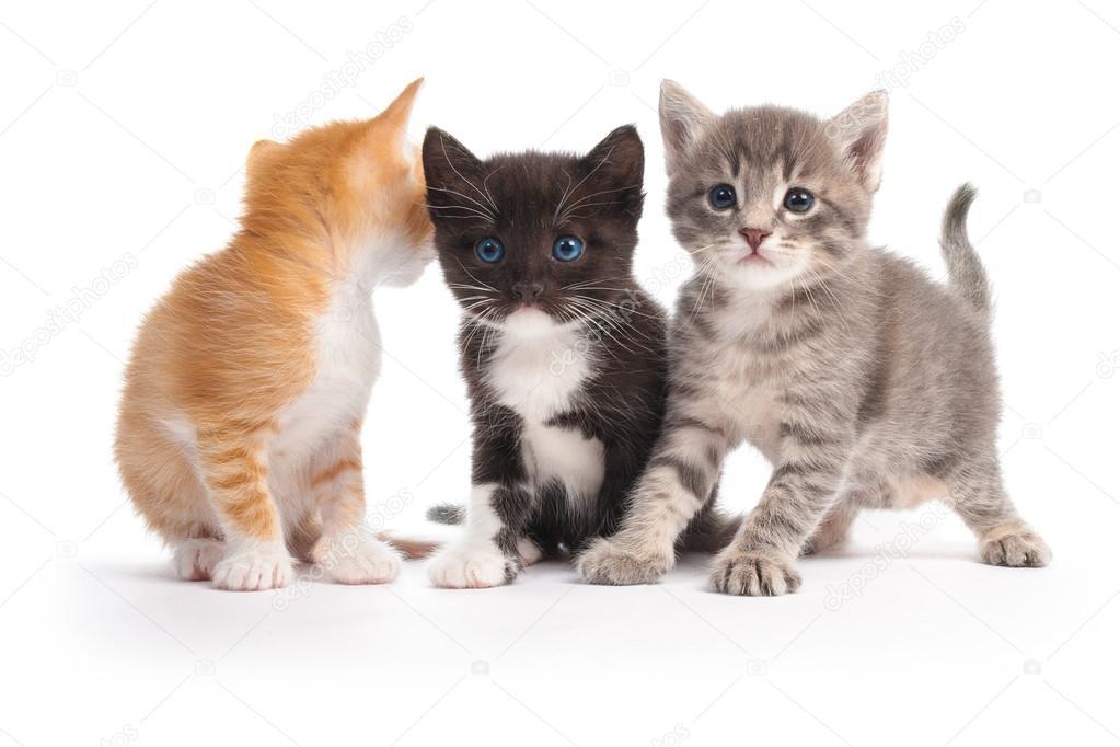 007-три котенка раскраска.