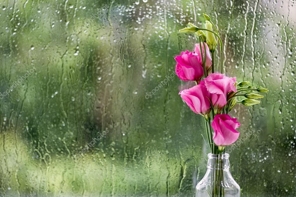 Eustomas in rain