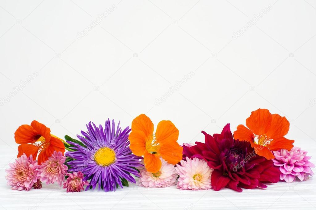 Fresh autumn flowers