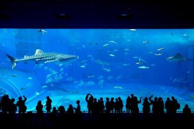 people watching fish at aquarium