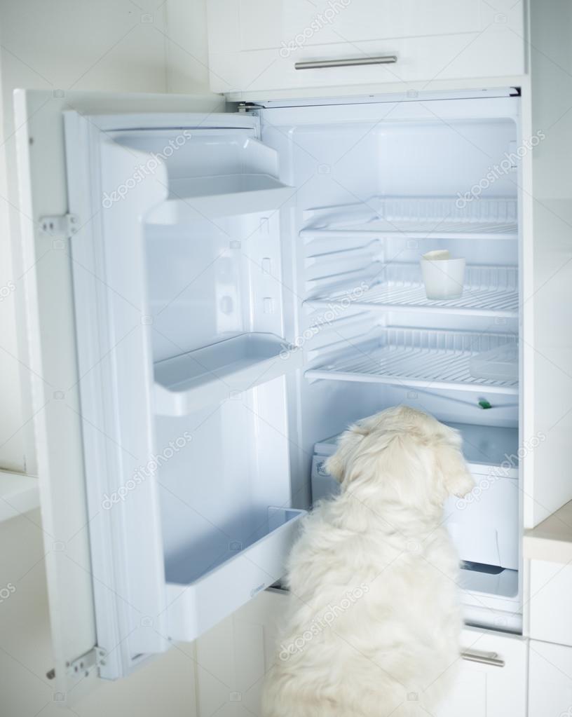 Hund suchen Lebensmittel im Kühlschrank — Stockfoto © londondeposit ...