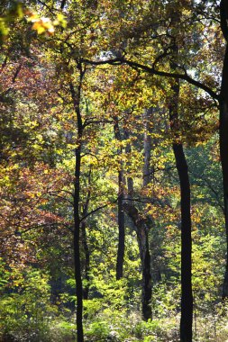 Autumn trees in woods