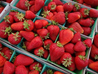 Strawberries displayed in square light blue plastic baskets