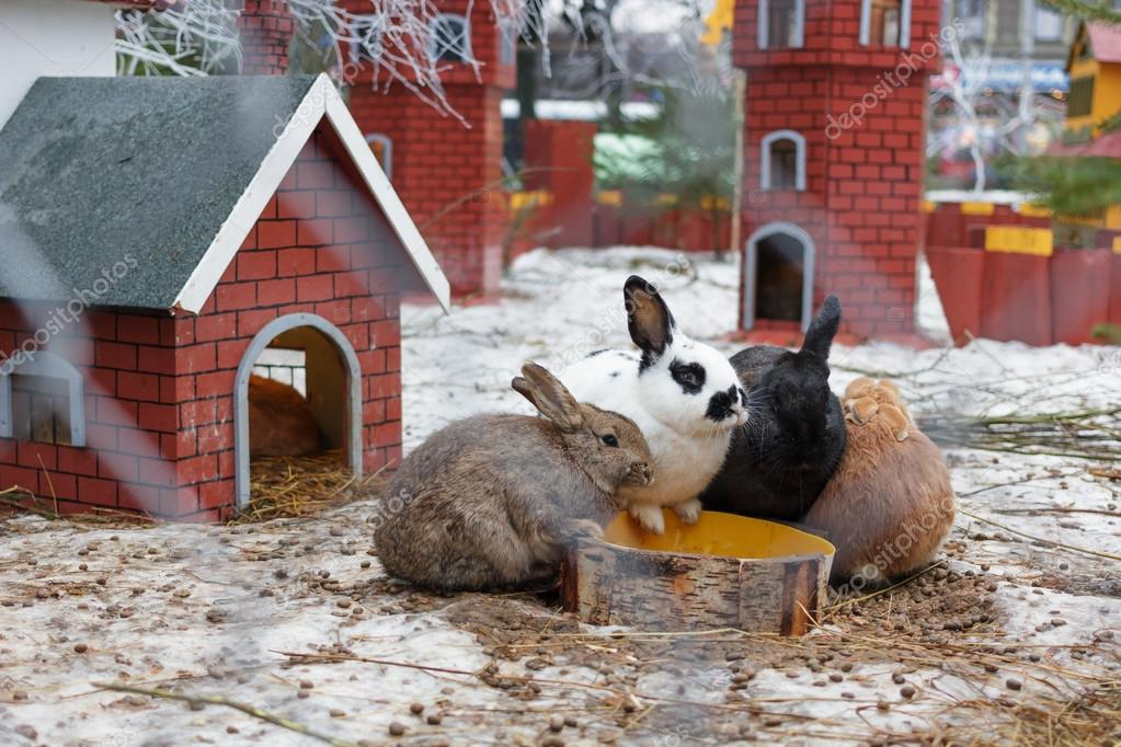 Kaninchen im Außengehege am Trog — Stockfoto © Koldunov #112487972