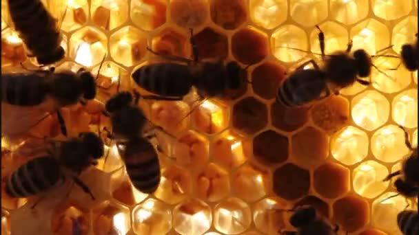 včely na voštiny