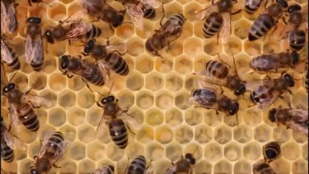 Bienen ernähren die Larven.