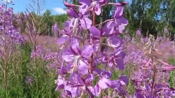 Kvetoucí chaluhy a včely.