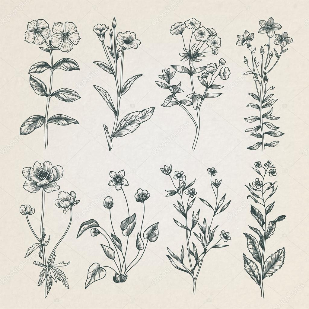 Vintage floral illustratie — Archivo Imágenes Vectoriales ...