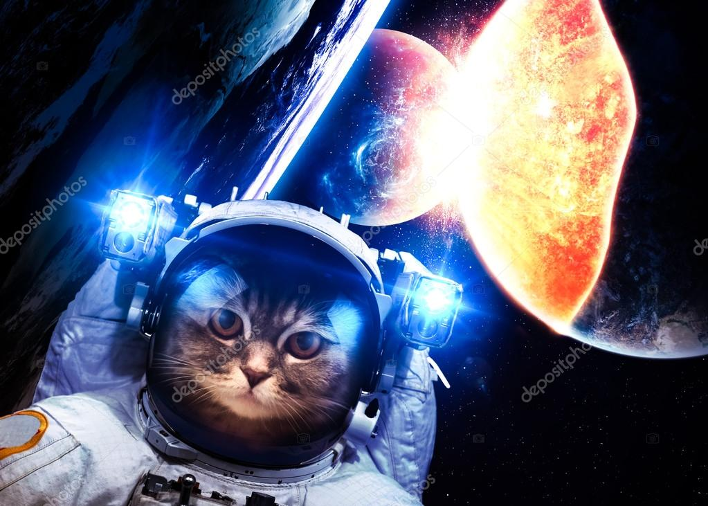 An astronaut cat floats above Earth. Stars provide the backgroun