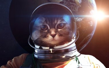 Astronaut cat in outer space against the backdrop of the planet earth. Elements of this image furnished by NASA