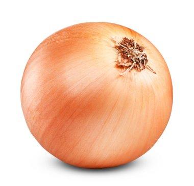 Ripe onion
