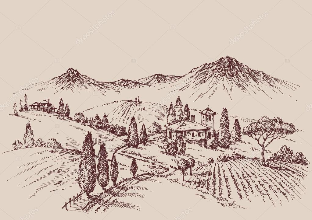 Vineyard sketch. Wine label design. Rural landscape drawing