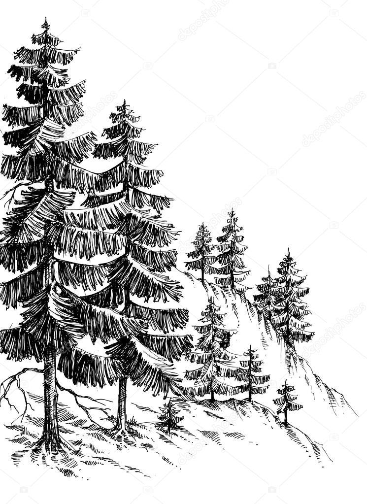Dennenbos Winter Berglandschap Tekening Stockvector C Danussa