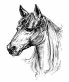Fotografia disegno testa di cavallo