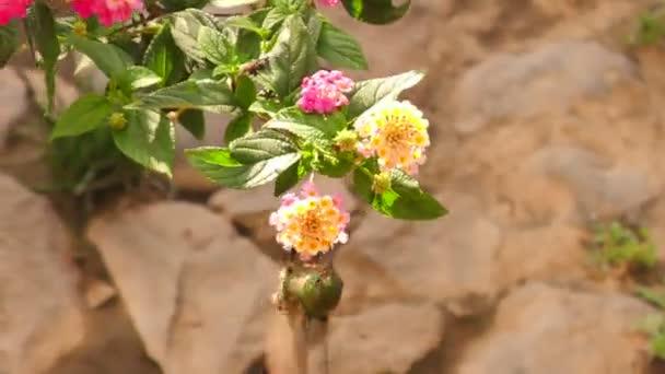 Kolibřík krmení od květ pyl