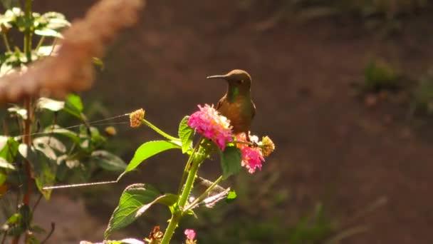 Barevné kolibřík na květinu v přirozené světlo