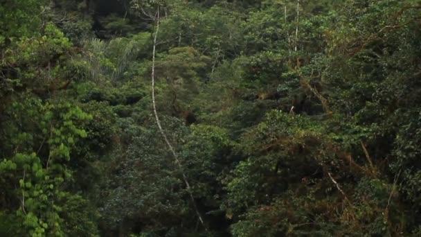 Rain Forest In Ecuadorian Andes