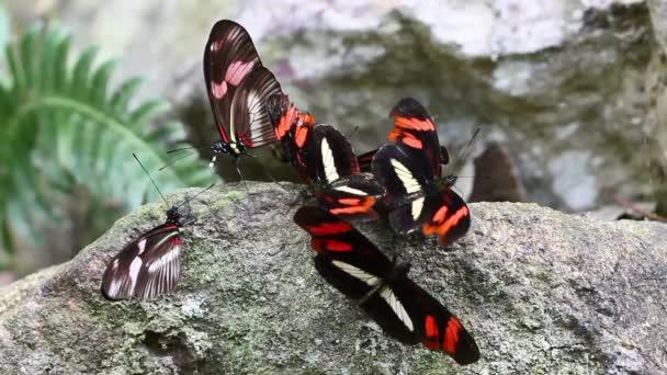 Sók, pillangó