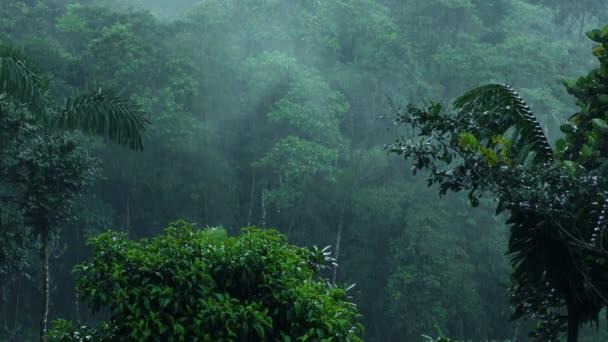 Wolkenwald Starkregen