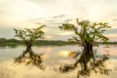 Cuyabeno Vegetation Against Sunset On Laguna Grande Ecuador stock vector