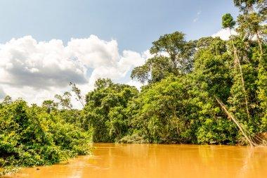 Dense Amazon Forest