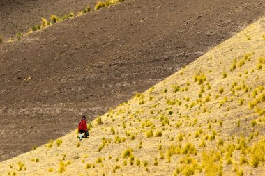 Peasant In Andes
