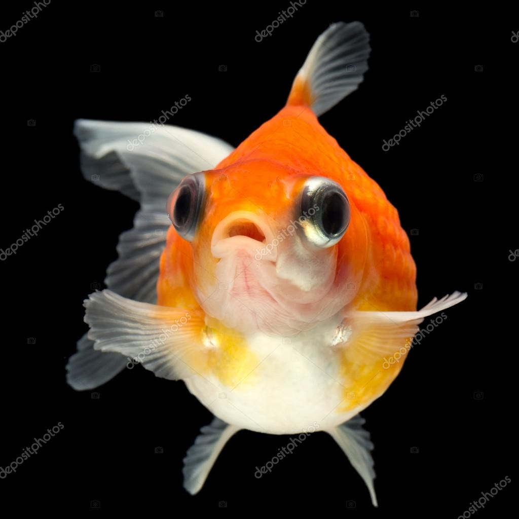Ammmit 88023666 for Is fish high in cholesterol