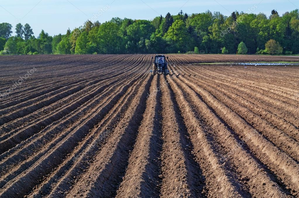 Tractor sows plowed spring field.