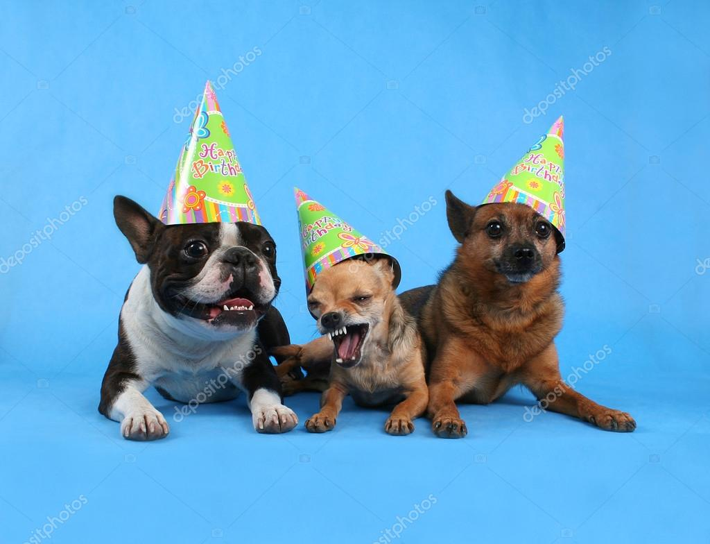 Dogs With Birthday Hats Stock Image