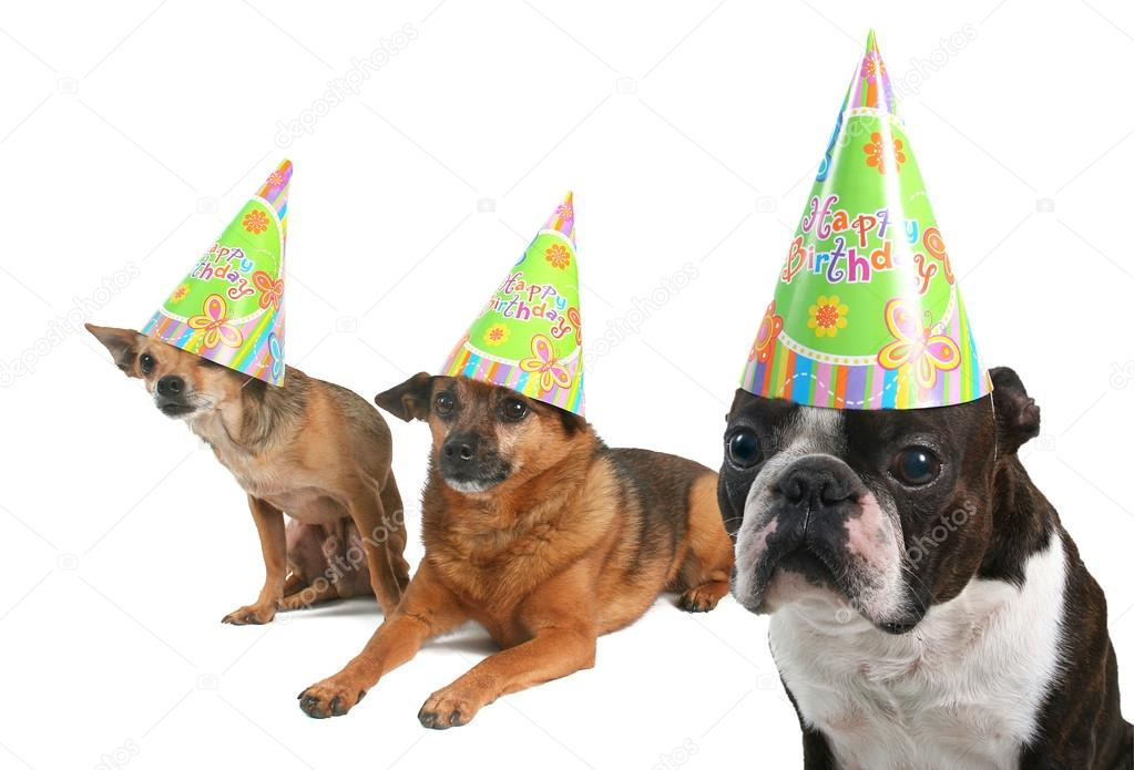 Three Dogs In Birthday Hats Stock Photo