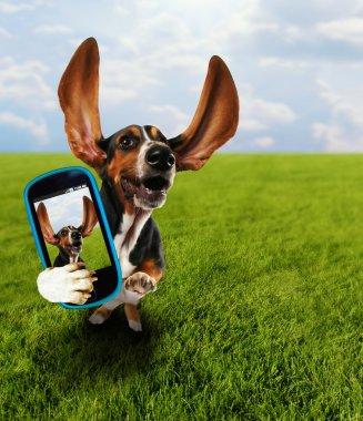 Basset hound taking selfie