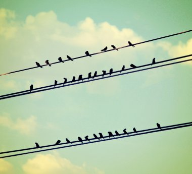 Birds on wires over blue sky