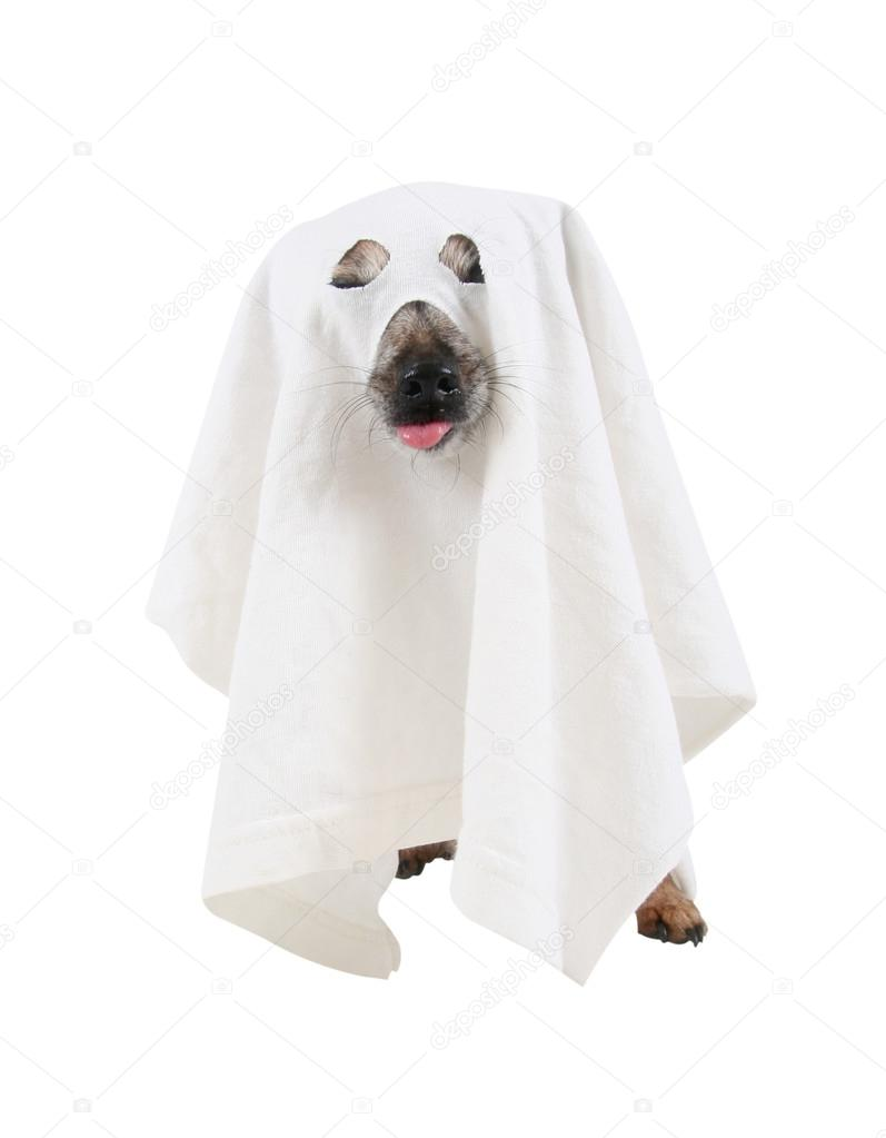 Dog dressed up as spooky ghost