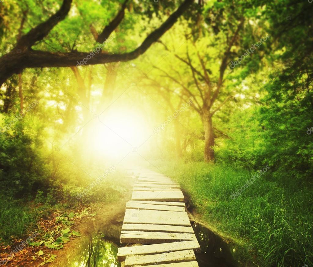 Bridge in green lush forest