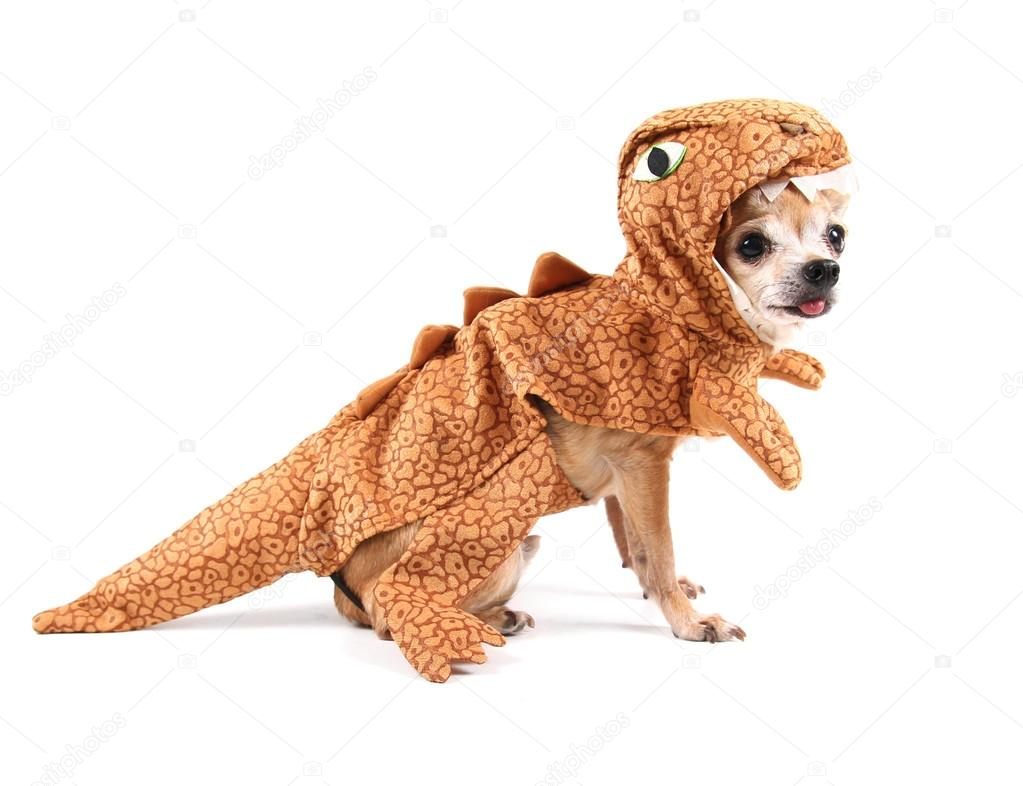 Chihuahua in dinosaur's costume