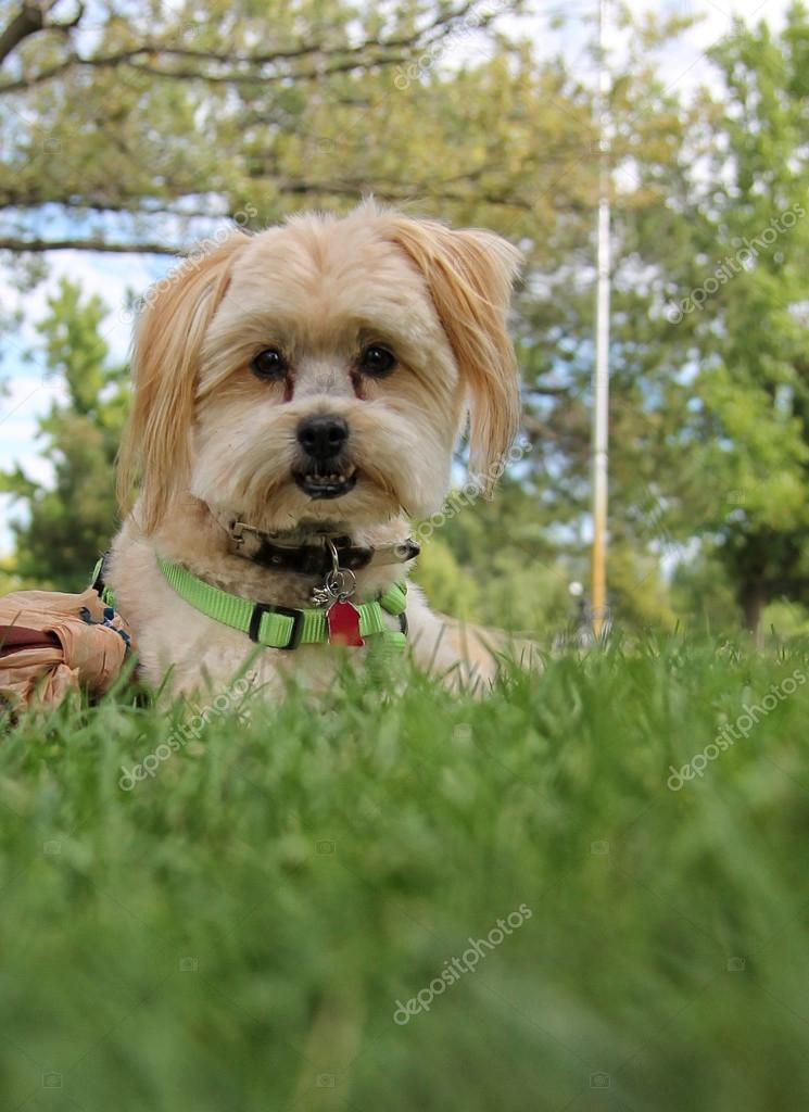 Cute dog in the grass