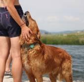 Photo Dog enjoying the outdoors