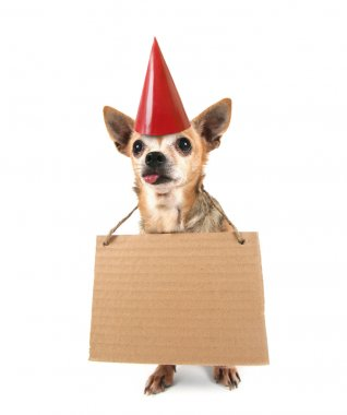 Chihuahua with sign
