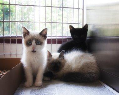 Kittens in an animal shelter