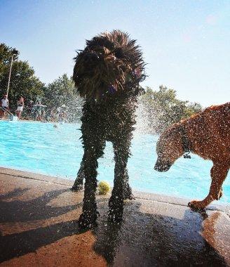 Dog at local public pool