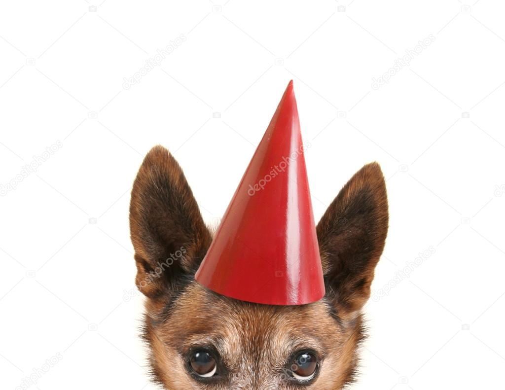 A Small Dog With Birthday Hat Photo By Graphicphoto
