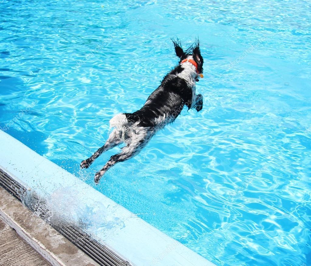 Hond bij zwembad stockfoto graphicphoto 53628983 for Zwembad aanschaffen