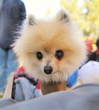 Dog at local park
